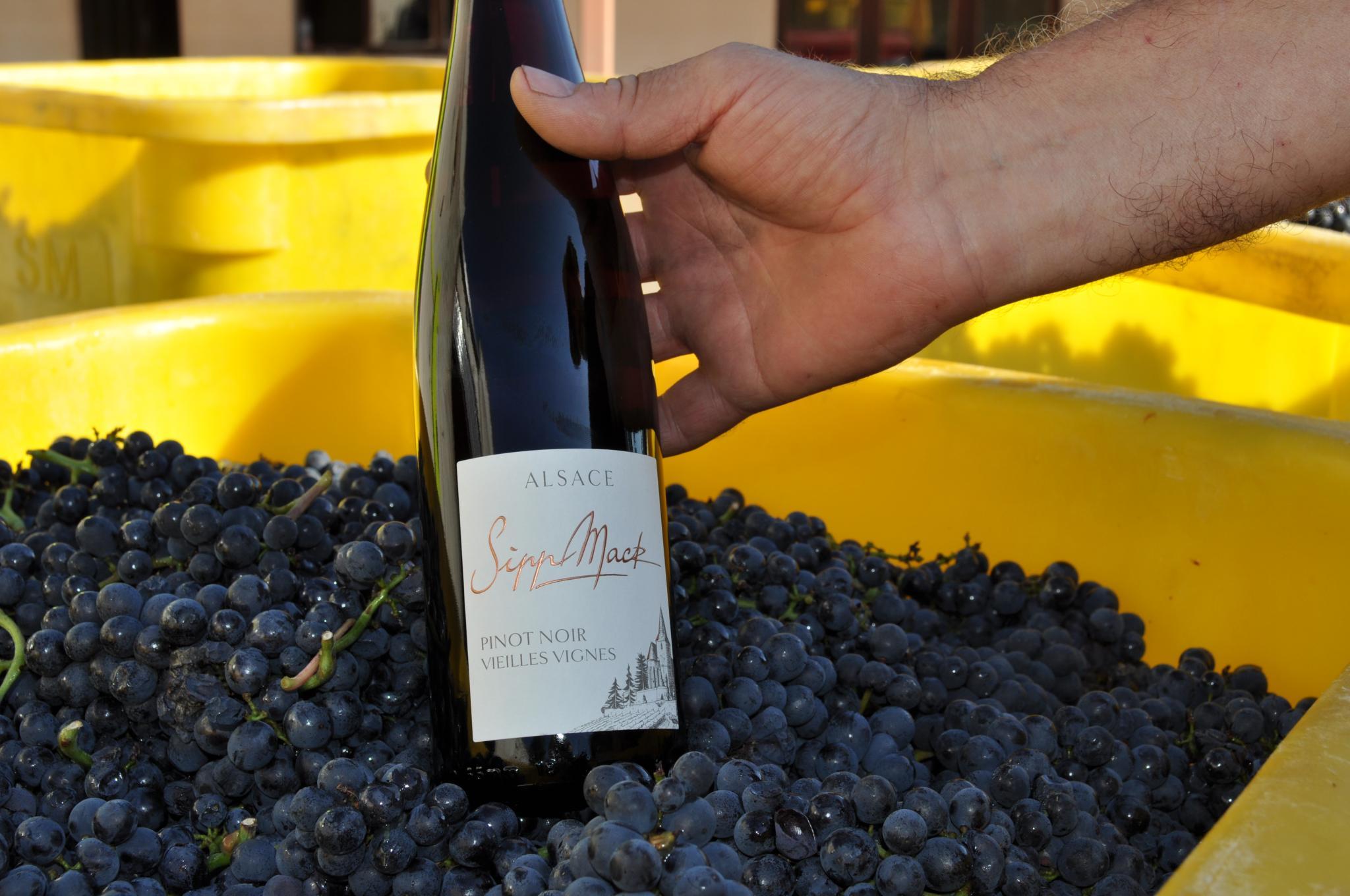 Pinot Noir Vieilles Vignes and grapes