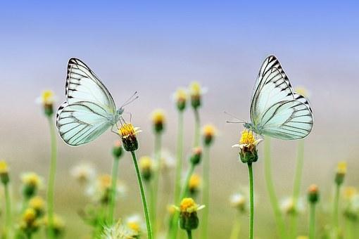butterfly 1127666 340[1]